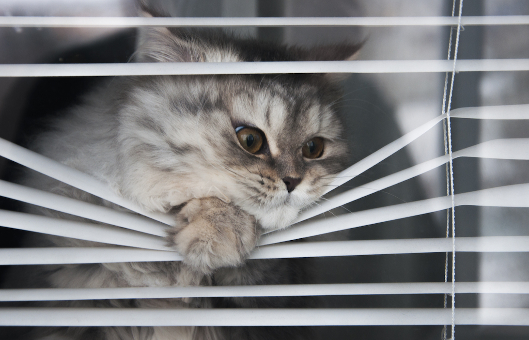 Sure signs that it is TIME to REPLACE Your Blinds